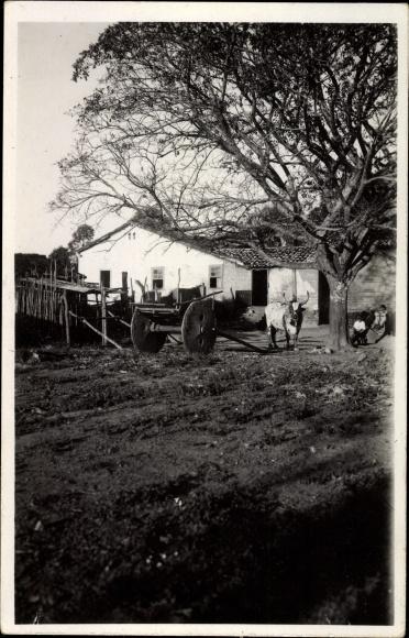 Foto Ak Brasilien, Wagen und Rinder auf einem Gehöft, Baum, Bauern