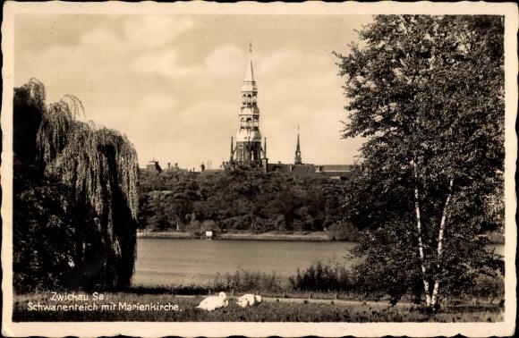 Ak Zwickau in Sachsen, Partie am Schwanenteich, Blick auf Marienkirche