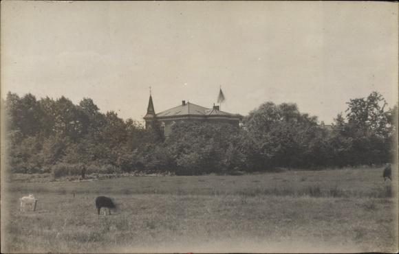 Foto Ak Deutschland, Blick zu einer Villa, Ziegen auf einer Weide