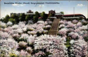 Ak Werder an der Havel, Bergrestaurant Friedrichshöhe, Baumblüte