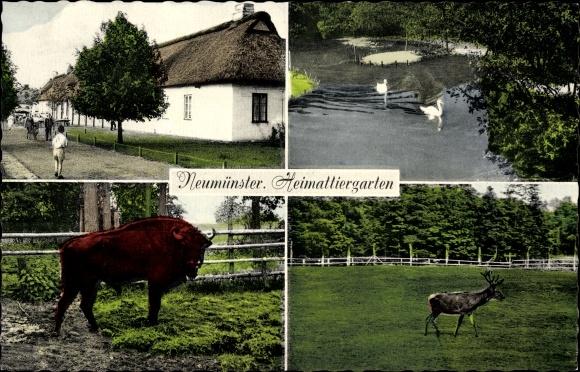 Ak Neumünster in Schleswig Holstein, Heimattiergarten, Hirsch, Bison