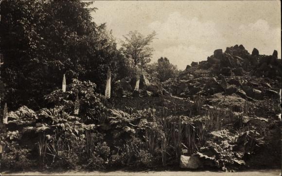 Ak Berlin Zehlendorf Dahlem, Botanischer Garten, Blick auf die Himalaya Gruppe