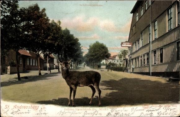 Ak St. Andreasberg Braunlage, Zahme Hirschkuh Mieke, Schützenstraße, Hotel Schützenhaus