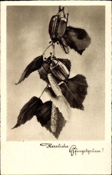 Ak Glückwunsch Pfingsten, Zwei Maikäfer auf einem Zweig