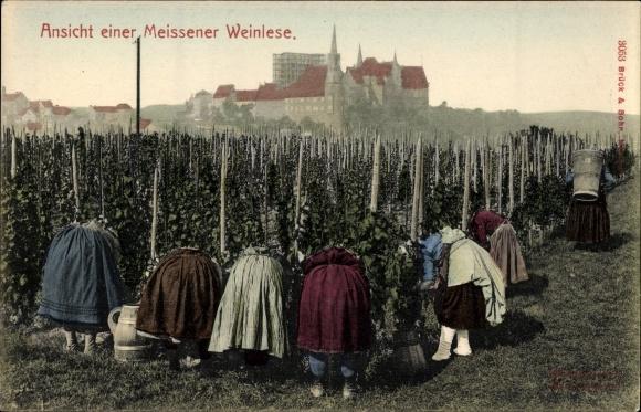 Ak Meißen in Sachsen, Ansicht einer Meissener Weinlese