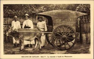 Ak Missions de Ceylan, Série V, La charrette à boeufs du Missionnaire