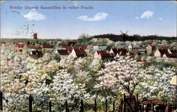 Ak Werder An Der Havel Blick Uber Die Baumbluten Zur Windmuhle