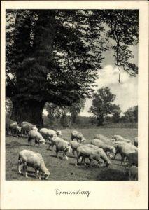 Ak Sommertag, Schafe auf einer Weide beim Grasen