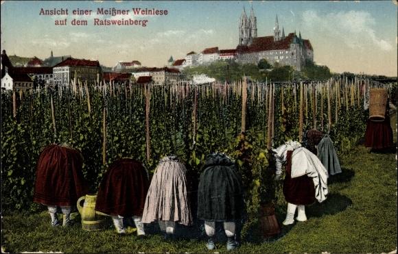 Ak Meißen in Sachsen, Ansicht einer Meißner Weinlese auf dem Ratsweinberg