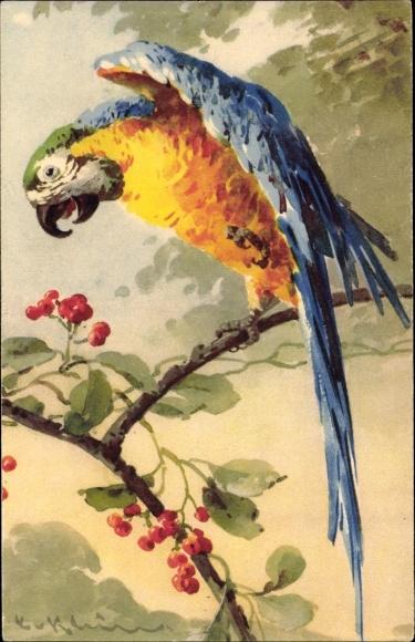 Künstler Ak Klein, Catharina, Ein Papagei auf einem Ast, Beeren, gelb blau grüne Federn