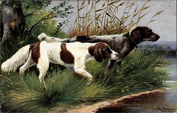 Künstler Ak Schönian, Alfred, Jagdhunde am Ufer eines Sees, Schilf