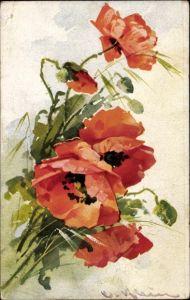 Künstler Ak Klein, Catharina, Mohnblumen, Blüten und Knospen