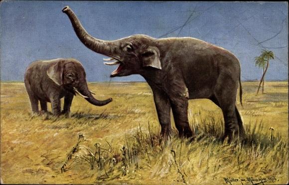 Künstler Ak Müller, Moritz, Jun., Elefanten in der Steppe