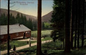 Ak St. Andreasberg Braunlage im Harz, Blick auf einen Rinderstall