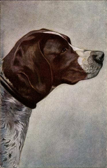Ak Seitenportrait eines Hundes, braun, weiß, Schnauze, Jagdhund