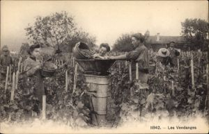 Ak Les Vendanges, Männer und Frauen bei der Weinlese, Weinberg