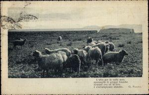 Ak Eine Schafherde auf einer Weide in einer italienischen Landschaft, Gedicht von G. Pascoli