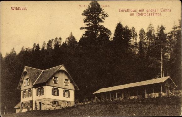 Ak Bad Wildbad im Kreis Calw Baden Württemberg, Forsthaus mit großer Tanne im Rollwassertal