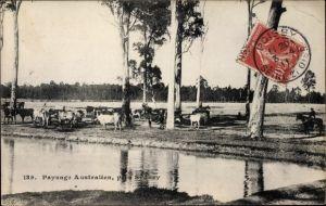 Ak Sydney Australien, Paysage australien, Rinderherde am Wasser
