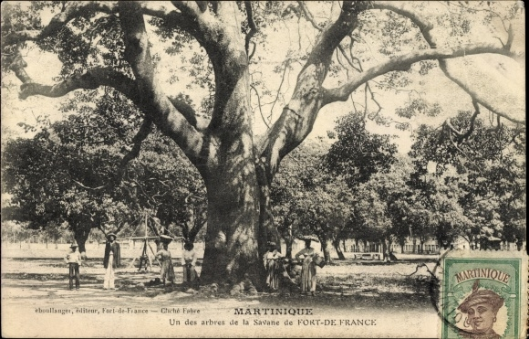 Ak Fort de France Martinique, Un des arbres de la Savane, Baum