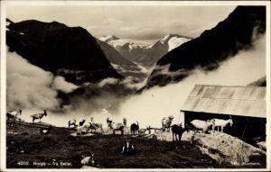 Ak Norwegen, fra fjellet, Ziegenherde an einer Hütte auf dem Berg