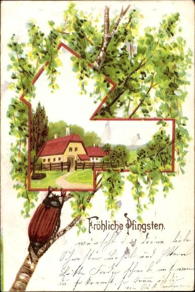 Ak Glückwunsch Pfingsten, Maikäfer auf einem Birkenast, Frühlingsidylle