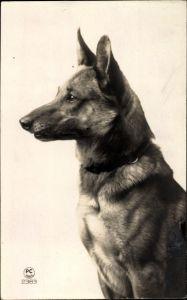 Ak Hundeportrait, Profilansicht von einem Schäferhund