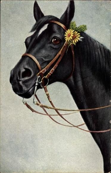 Künstler Ak Pferdeportrait, schwarzes Pferd mit Zaumzeug, Zieher 144 940