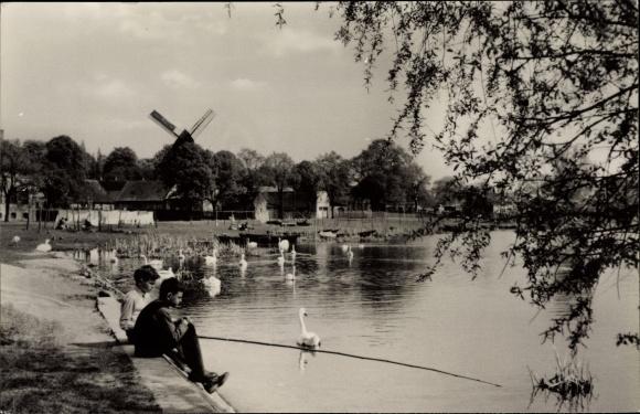 Ak Werder an der Havel, Wasserpartie an der HAvel mit Blick auf Windmühle, Schwäne