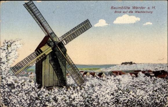Ak Werder an der Havel, Baumblüte, Blick auf die Wachtelburg, Windmühle