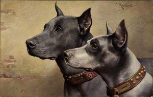 Künstler Ak Reichert, Carl, Doggen, Hundeportrait, Schnauze, Halsband