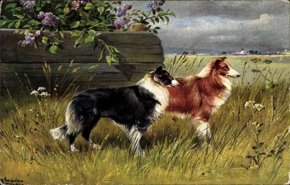Künstler Ak Schönian, Alfred, Zwei Collies oder Shelties, Hunde
