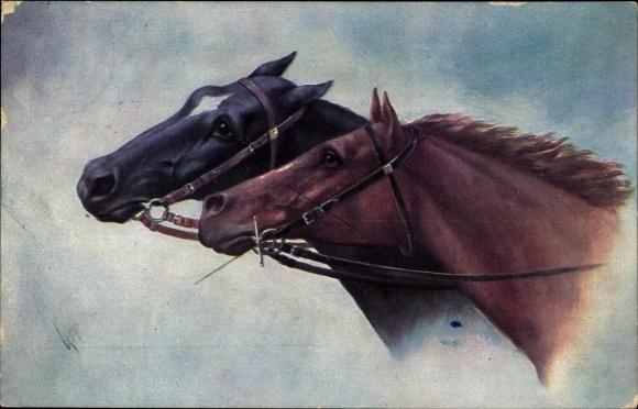 Künstler Ak Pferdeportrait, Pferdeköpfe mit Zaumzeug