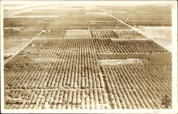 Ak Oregon USA, Orchards along the Columbia River, Obstplantagen, Bäume