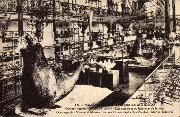 Ak Monaco, Musée Oceanographique, Meeresforschungsmuseum, Seeelefant, Exponate, Ausstellungsraum