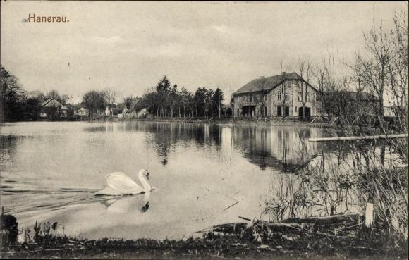 Ak Hanerau Hademarschen in Schleswig Holstein, Teichpartie, Schwan, Wohnhäuser