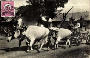 Ak Ungarn, Vierer Ochsenzug, Männer auf einem Rinderkarren vor einem Brunnen