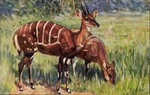 Künstler Ak Winkler, F., Schirr Antilopen, Tragelaphus scriptus Pall., Westafrika
