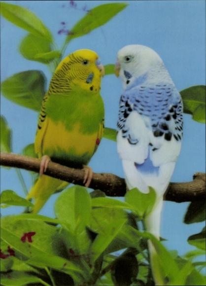 3-D Ak Zwei Wellensittiche auf einem Ast, Papageien