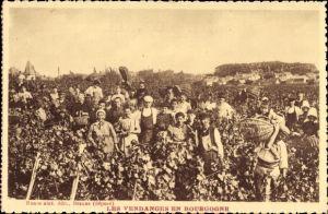 Ak Les Vendanges an Bourgogne, Helfer bei der Weinernte, Weinstöcke