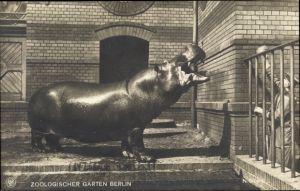 Ak Zoologischer Garten Berlin, Nilpferd wird von Tierpfleger gefüttert, NPG