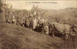 Ak Les Vendanges, Groupe de Vendangeurs, Winzer bei der Arbeit, Rinder