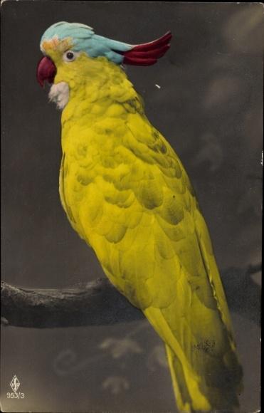 Ak Papagei sitzt auf einem Baumast, Gelbes Federkleid