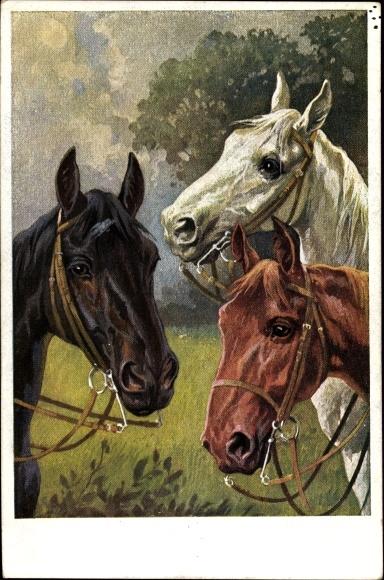 Künstler Ak Trache, R., Drei Pferde, Kopfstudien