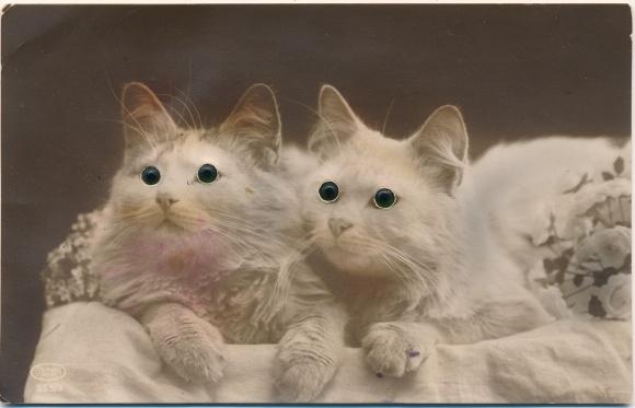 Mechanische Ak Zwei Hauskatzen, Bewegliche Augen