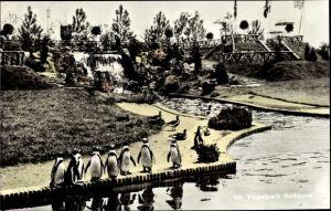 Ak Pinguine, Gehegeanlagen, Wasserfall, Vogelpark Avifauna, Alphen aan den Rijn Südholland Niederl.