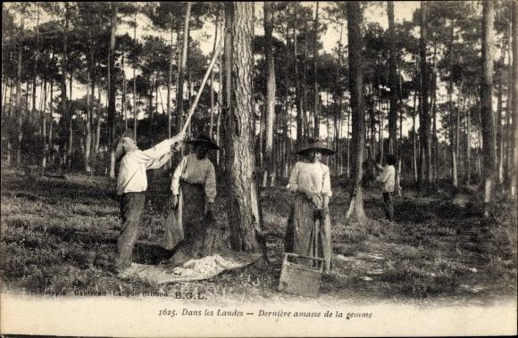 Ak Dans les Landes, Dernière amasse de la gemme, Harzernte im Wald