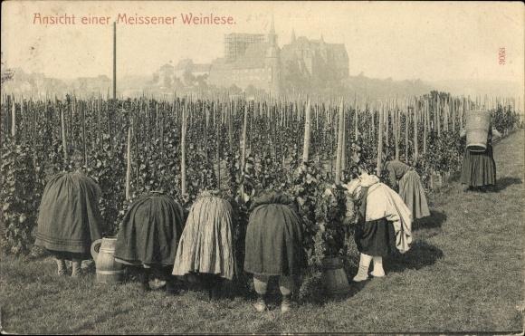 Ak Meißen in Sachsen, Ansicht einer Meißener Weinlese, Frauen bei der Ernte, Albrechtsburg