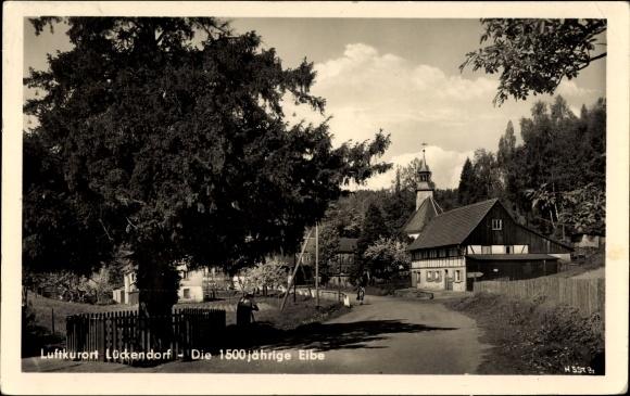 Ak Lückendorf Oybin in Sachsen, Die 1500 jährige Eibe, Straßenpartie im Ort
