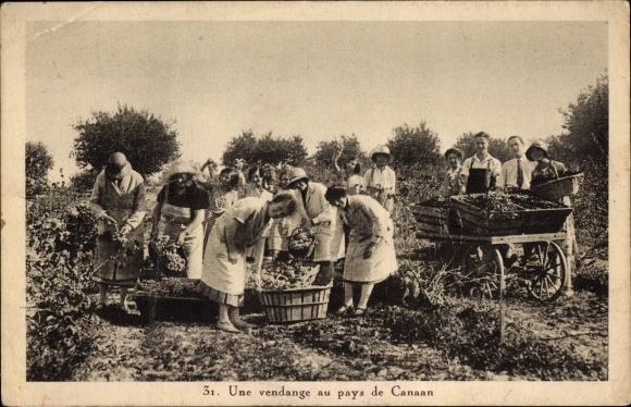 Ak Une vendange au pays de Canaan, Frauen bei der Weinlese